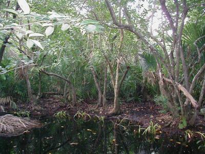 Jungle1pt